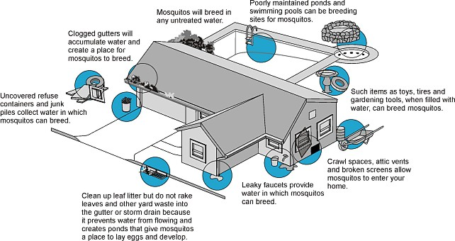 House with larval locations