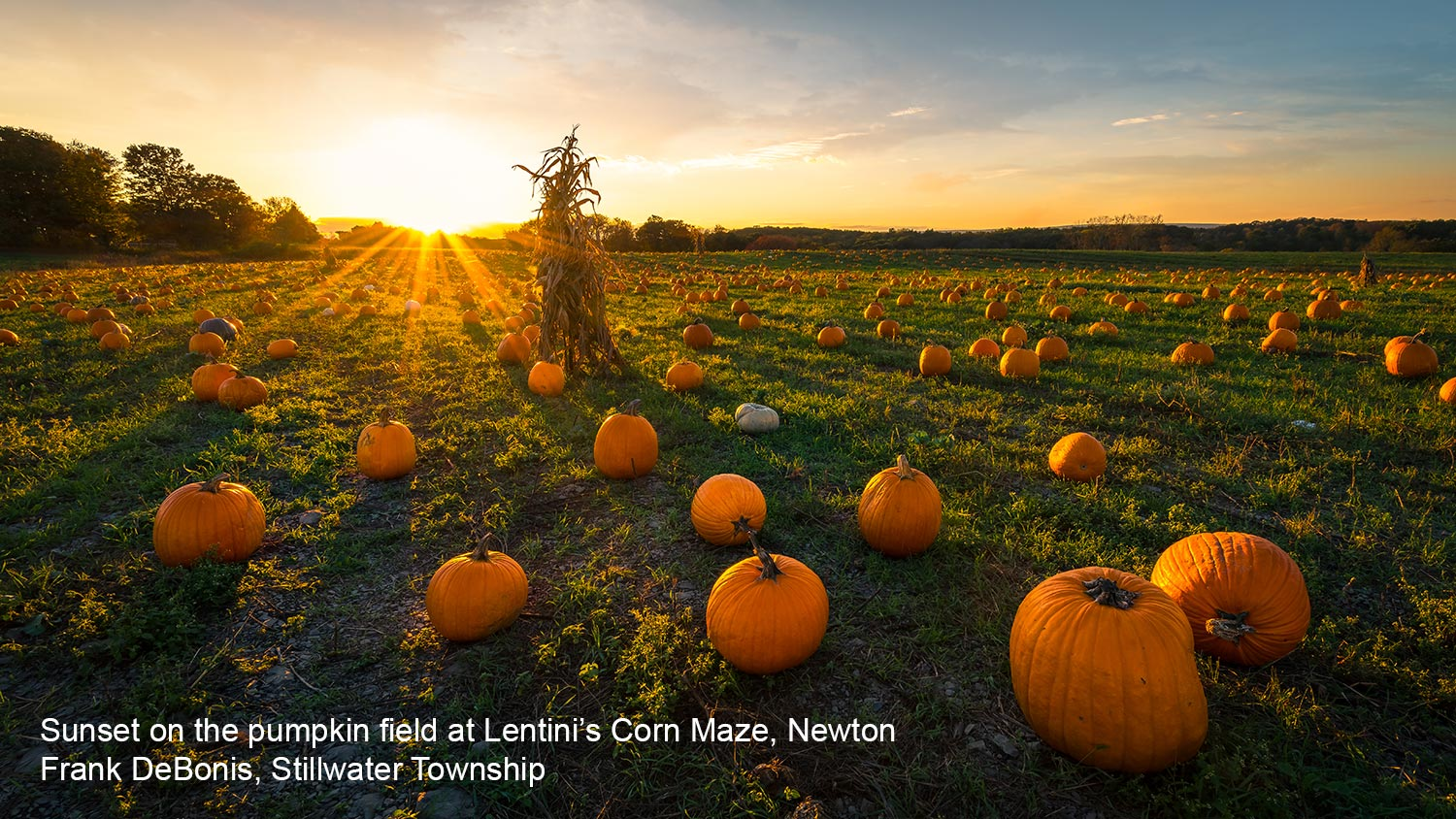 Sunset on the Pumpkin Field at Lentini's Corn Maze
