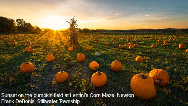 Sunset on the pumpkin field