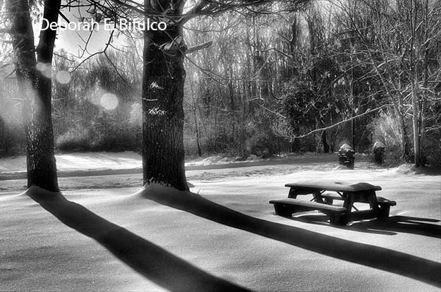 Picnic at Kittatinny Valley St. Park by Deborah E. Bifulco