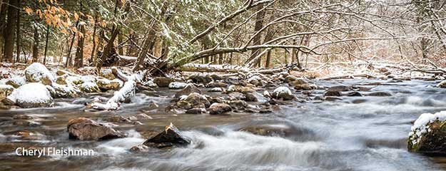 Frosted Flatbrook - Stokes State Forest